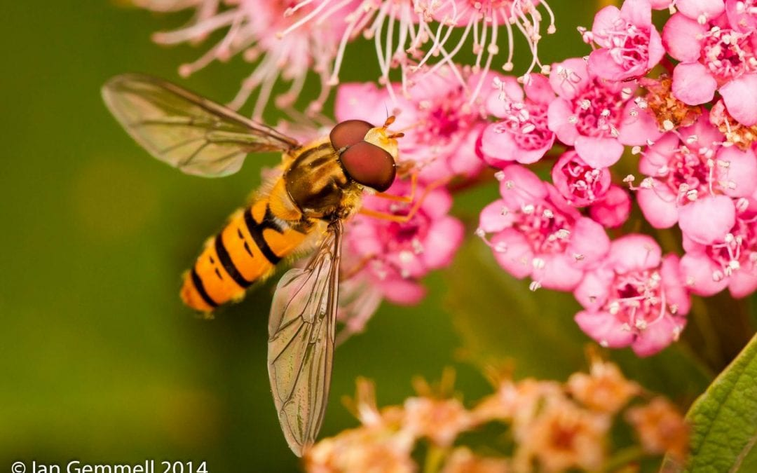 Insect Life Amongst the Flowers